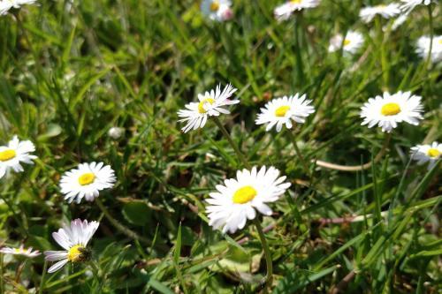 bloemetjes-in-gras